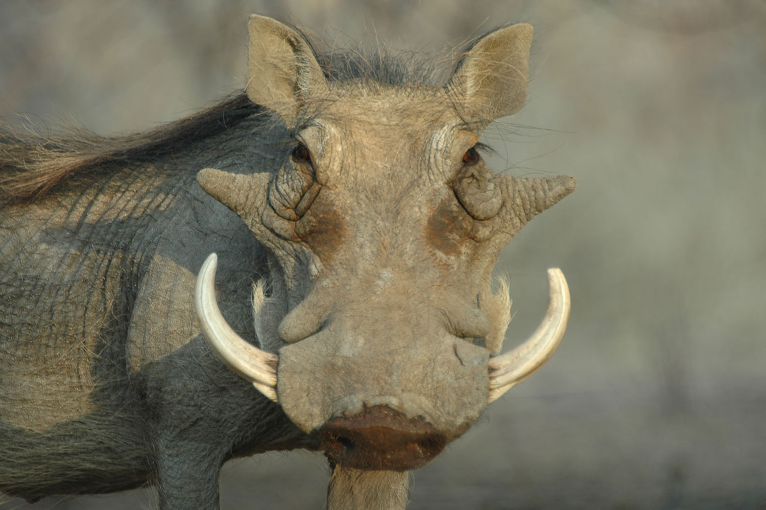 hunting warthog with watervale safaris